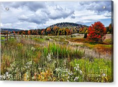 August Fall Colors Flowers And Trees I - West Virginia Acrylic Print by Dan Carmichael