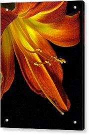 August Flame Glory Acrylic Print