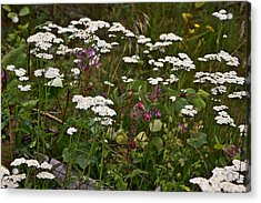 Acrylic Print featuring the photograph August Flowers by Jeremy Rhoades