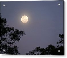 August Moon Acrylic Print by Evelyn Tambour