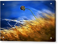 August Rush Acrylic Print by Graham Hawcroft pixsellpix