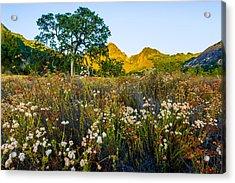 August Sunrise In Malibu Creek State Park Acrylic Print