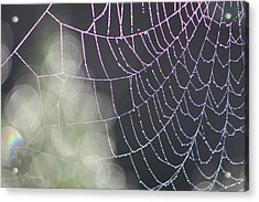 Acrylic Print featuring the photograph Aurora's Web by Cathie Douglas