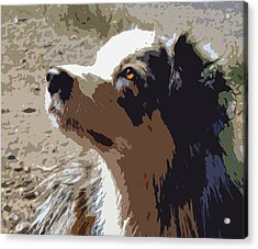 Aussie Acrylic Print by Nancy Merkle