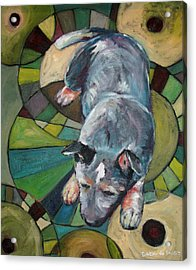 Australian Cattle Dog Nap Time Acrylic Print