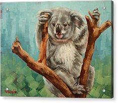 Australian Koala Acrylic Print