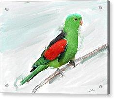 Australian Parrot Acrylic Print by Zilpa Van der Gragt