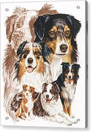 Australian Shepherd Revamp Acrylic Print
