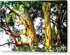 Australian Trees Acrylic Print by John Potts