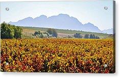 Autum Wine Field Acrylic Print by Werner Lehmann
