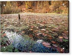 Autumn - 10 Acrylic Print by Okan YILMAZ