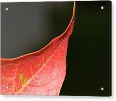 Acrylic Print featuring the photograph Autumn 2 by Tara Lynn