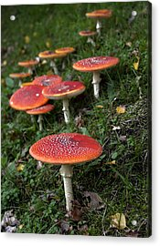 Autumn 2013 Acrylic Print by Frits Selier