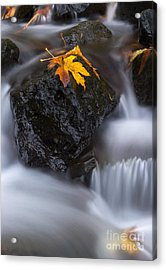 Autumn Above And Below Acrylic Print by Mike Dawson