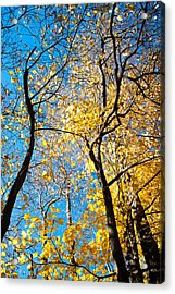 Autumn Abstract Acrylic Print by Jeanne Sheridan