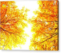 Autumn Abstract Acrylic Print by Tim Good