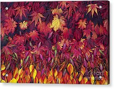 Autumn Acer Leaves Pattern Acrylic Print by Tim Gainey