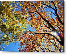 Autumn Afternoon Acrylic Print by Cricket Hackmann