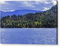 Autumn Among The Pines Acrylic Print