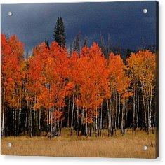 Autumn Aspen Acrylic Print by Brenda Pressnall