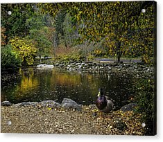 Autumn At Lithia Park Pond Acrylic Print by Diane Schuster