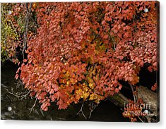 Autumn At Suttle Lake Acrylic Print