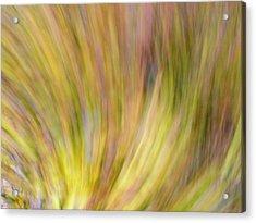 Autumn Azaleas 4 Acrylic Print