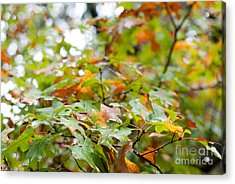 Autumn Acrylic Print by Barbara Shallue