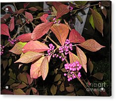 Autumn Beauty Berry Acrylic Print by Marlene Rose Besso