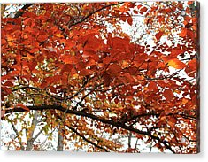 Acrylic Print featuring the photograph Autumn Beauty by Candice Trimble