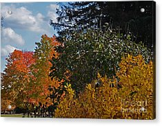 Acrylic Print featuring the photograph Autumn Beauty by Judy Wolinsky