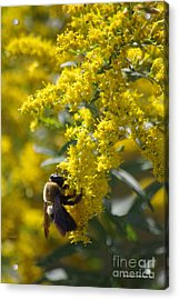 Autumn Bee Acrylic Print by Tannis  Baldwin