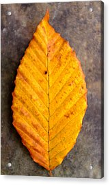 Autumn Beech Leaf On Stone Two Acrylic Print by Chris Bordeleau