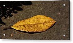 Autumn Begins Acrylic Print by Kathi Isserman