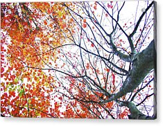 Autumn Bleeds Acrylic Print