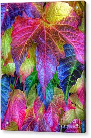 Autumn Bold Acrylic Print by Susan Garren