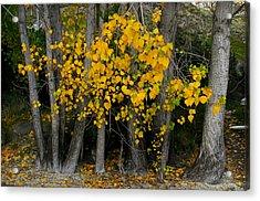 Autumn Breakout Acrylic Print