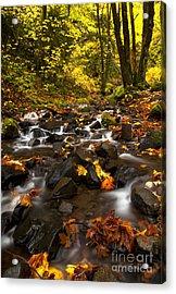 Autumn Breeze Acrylic Print by Mike  Dawson