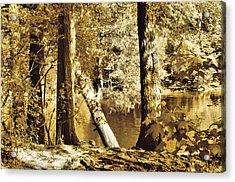 Autumn Breeze  Acrylic Print by Thomas  MacPherson Jr