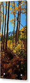 Autumn Brilliance 2 Acrylic Print