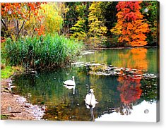 Autumn By The Swan Lake Acrylic Print