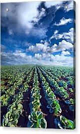 Autumn Cabbage Acrylic Print