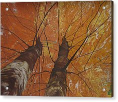 Autumn Canopy Acrylic Print by Harvey Rogosin