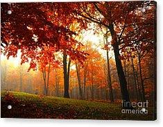 Autumn Canopy Acrylic Print by Terri Gostola