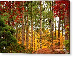 Autumn Canvas Acrylic Print