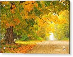 Autumn Cascade Acrylic Print by Terri Gostola