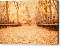 Autumn - Central Park Elm Trees - New York City Acrylic Print by Vivienne Gucwa
