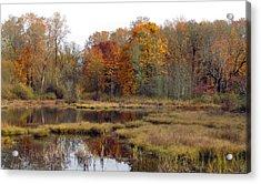 Autumn Changes  Acrylic Print by I'ina Van Lawick
