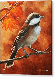 Autumn Chickadee Acrylic Print by Crista Forest