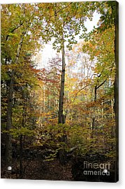 Autumn Clearing Acrylic Print by Linda Marcille